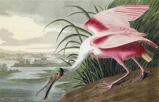 Audubon++Birds+of+America.jpg